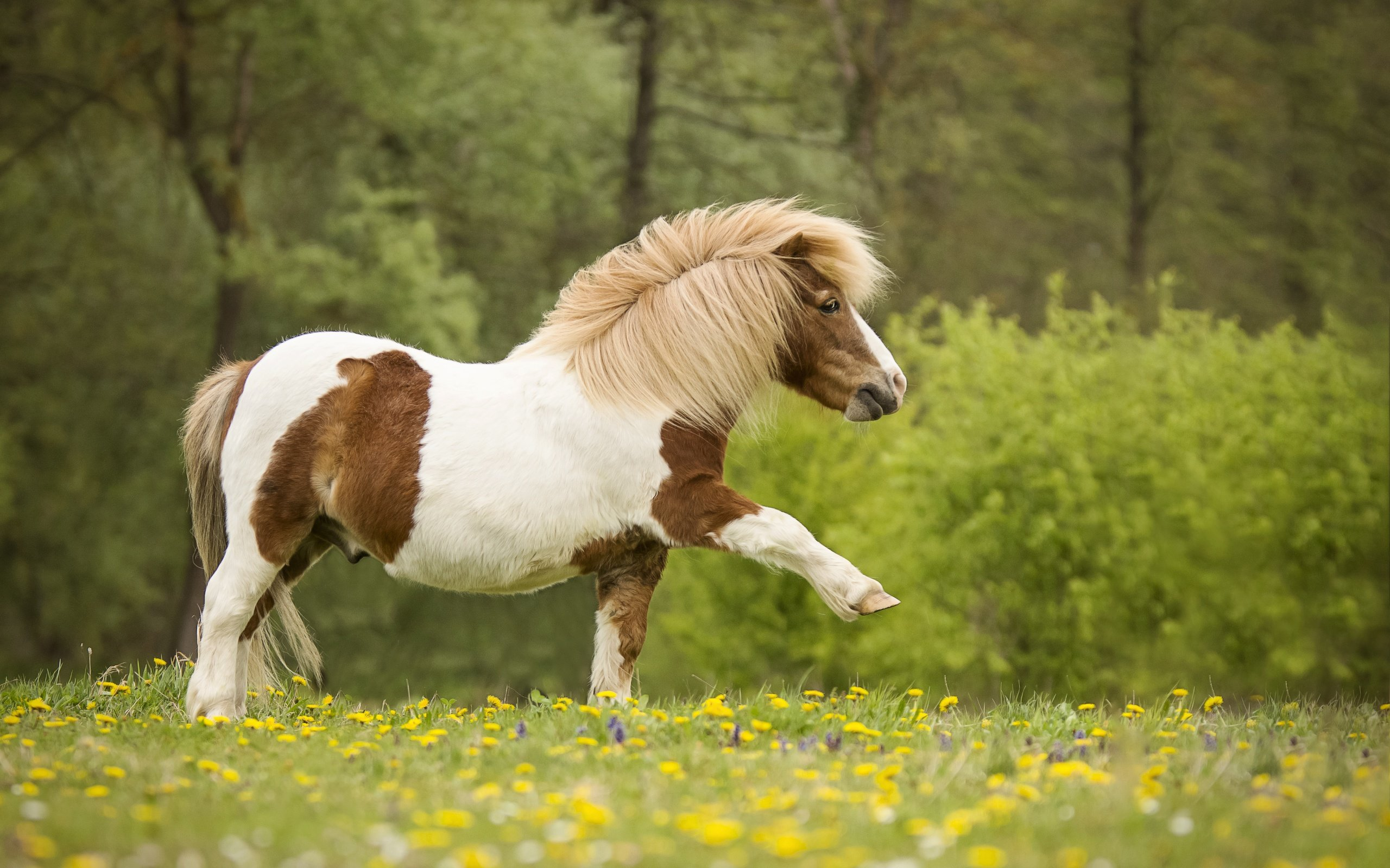Пони, Фото: Web-Zoopark.Ru