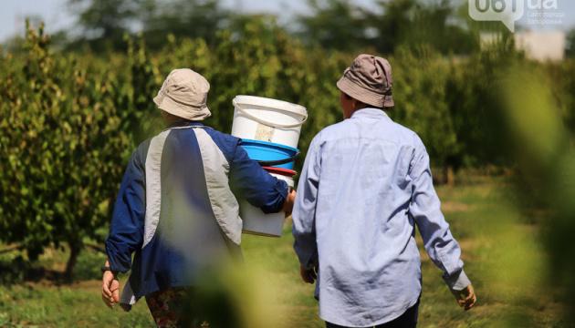 В Запорожской области собирают урожай кизила