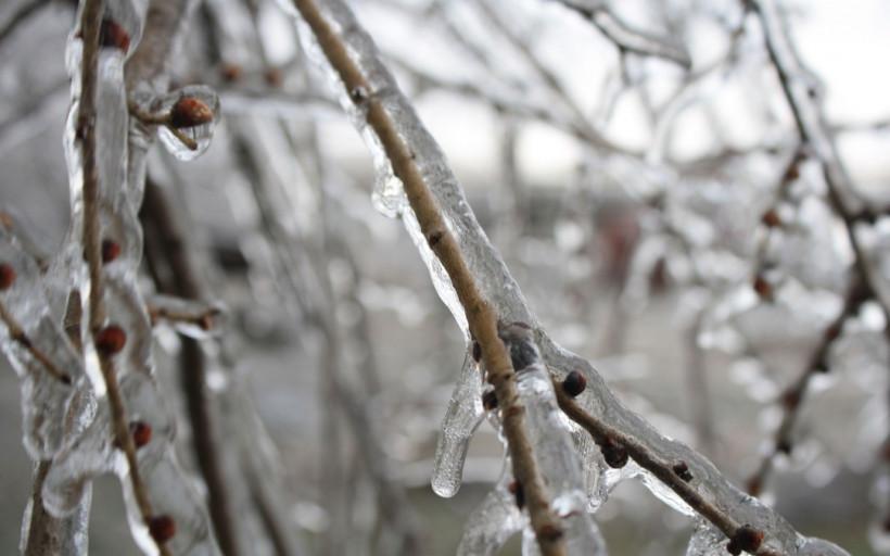 Аномальная зима и урожай: пессимизм фермеров и оптимизм ученых