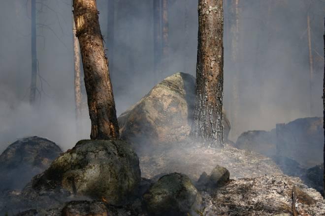 Лесной пожар в Калифорнии становится самым крупным в истории штата