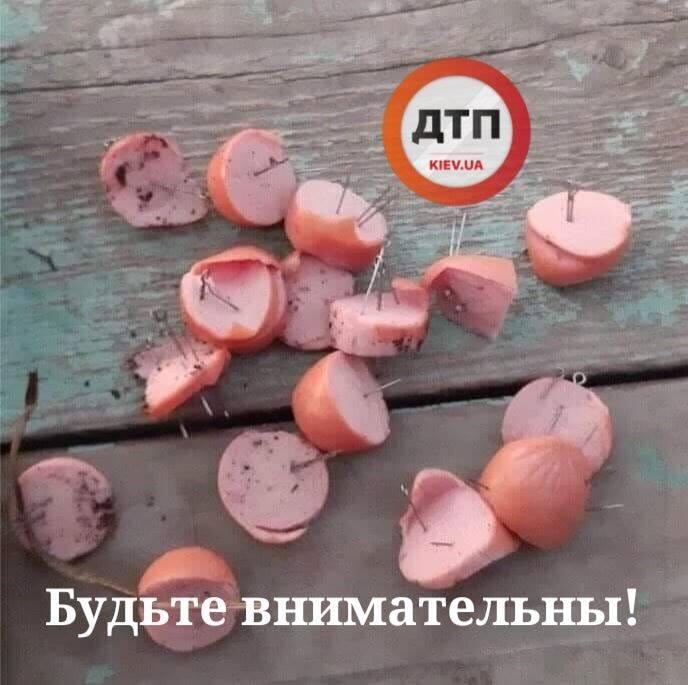 В Киеве активизировались догхантеры: на дорогах заметили сосиски с иголками и булавками (ФОТО)