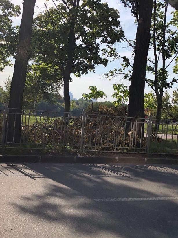 Ураган в Киеве: столичные коммунальщики не удосужились убрать улицы от рухнувших деревьев (ФОТО)