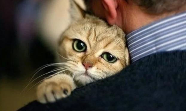Самые нежные объятия: в Сети показали котов, которые очень любят своих хозяев (ФОТО)