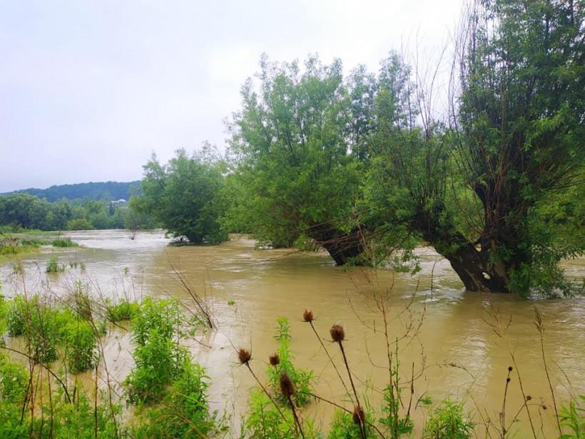 В Черновицкой области после обильного дождя вышла из берегов река: затопило часть села (ФОТО)