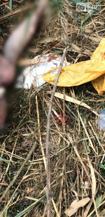 В Николаеве в камышах нашли тело мужчины (ФОТО)